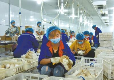 濮阳县发展产业脱贫增收