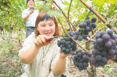 正阳县连片高效种植增加农户收入