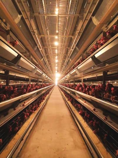 睢县发展现代蛋鸡饲养产业