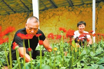 生态农业促增收