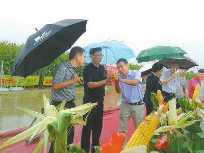 玉米新品种品鉴会在荥阳市举行