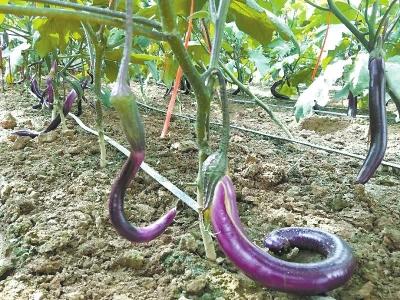 发展现代种业助推乡村振兴