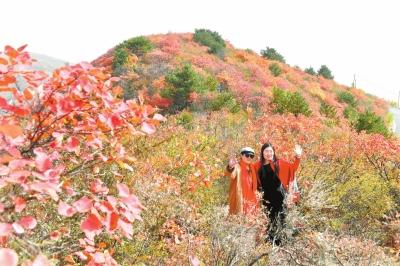韶山红叶红似火