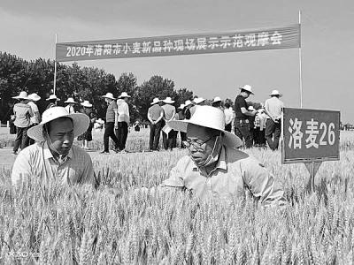 筛选适合品种 助力小麦丰收