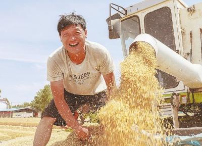 尉氏縣104萬畝小麥開始全面收割