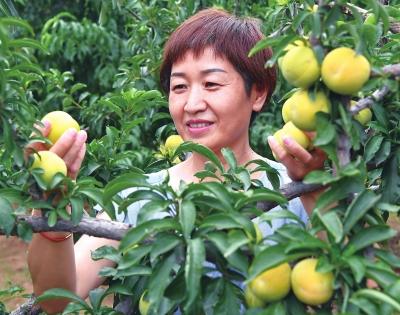 沁阳市:小杂果富了一村人