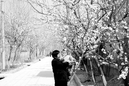 看师庄村人的幸福生活