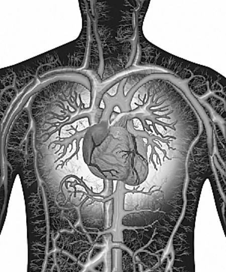 身体结构图内脏背面