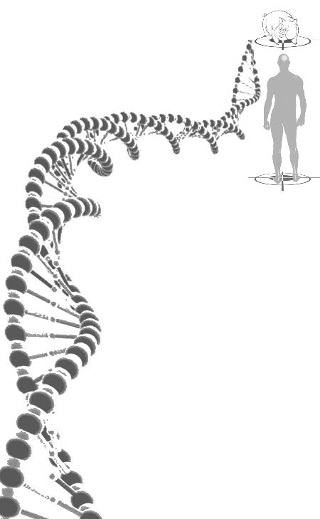 肾脏,胰岛,神经细胞以及软骨细胞,与人的相应器官,组织和细胞在结构