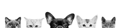 A级宠物美容师年入可达15万