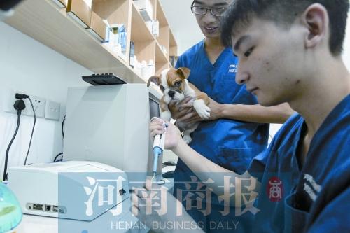 目前郑州有200多家宠物医院 每年新开3至5家