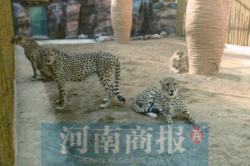 咋御寒   供暖以暖气为主,大食蚁兽馆不能低于25℃   郑州市动物园