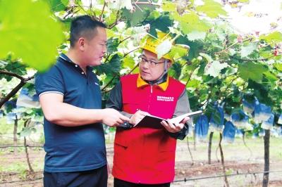 叶县供电公司:电力护航 为乡村振兴赋