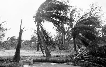 7月16日,西沙永兴岛上的椰子树被台风吹得七零八落