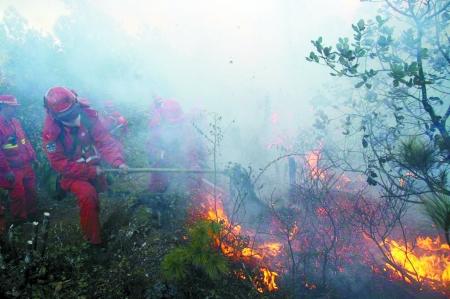 丽江森林大火图片