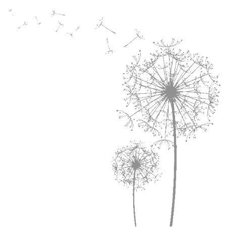 蒲公英插画小报插图蒲公英蒲公英背景透明素材蒲公英