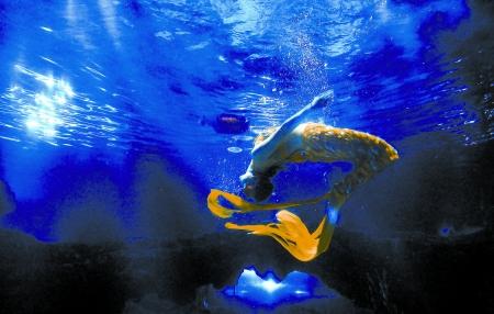 ... 图画 海底世界画 齐河海底世界美人鱼 宽450x286高