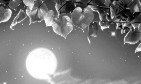月亮出来亮汪汪