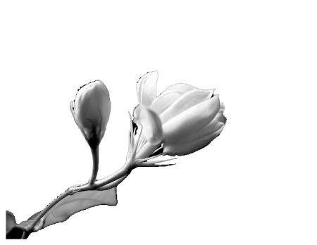 描写葡萄嫩芽的句子