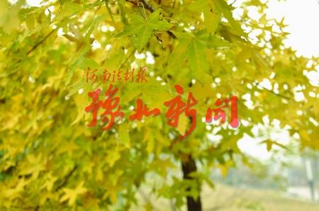 关于秋天的诗句古诗图片展示