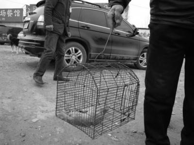 3月18日上午,安阳共同家园野生动物保护协会成员在安阳市豫北宠物市场内发现有2名中年男子提着4张黄鼠狼皮毛和1只他们捕获的黄鼠狼尸体进行贩卖,且有不少市民围观过问。随后,他们与该两名贩卖者交涉后当场将这些皮毛和黄鼠狼尸体进行焚烧处理。 记者陈栋梁见习记者常秀明摄影报道
