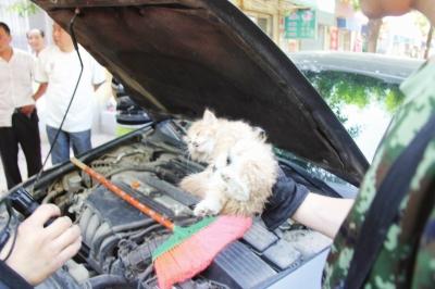 """据了解,""""猫钻车""""易发生在冬天和春天,以及大风降温的时候,因为发动机"""