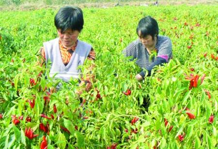调整产业结构 提高农民收入