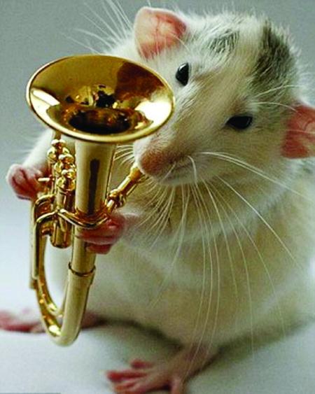宠物鼠乐队