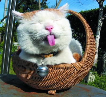 松木猫砂很除臭,水晶猫砂方便清理