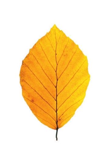 又到落叶缤纷的时节,各种深浅木色构成了秋日的别样风景。何不让这片温馨木色进驻你家,打造一个工作、学习的角落,让书香缭绕木色,让木色更衬书香。 美克美家为你用木色尽染书香。伊森艾伦玫颂扶手椅,经典木色融汇巴洛克风情,繁复典雅的雕花靠背,让你在这片奢华木色的环抱中畅游书海。伊森艾伦英国经典办公柜,红枫木雕刻生动的转角和雕花,精美的外观,内藏丰富的功能区域,在雅致木色中沉淀经世沉香的文化之气。Caracole荟旋OntheBall圆桌,胡桃木搭配独特橡木节面板,造型时尚而不张扬,为你营造出一片颇具品位