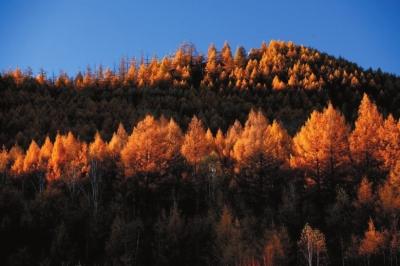 阿尔山市位于内蒙古兴安盟西北部,横跨大兴安岭西南山麓,全市人口5.