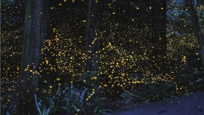 树林里还能见到成片的萤火虫,六七十岁的人还能记得,那时的夏日夜晚