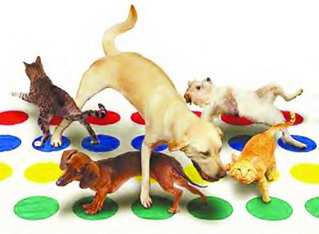 动物运动模仿秀作业
