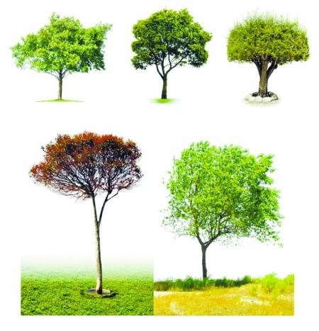 炎热地区夏季树木养护